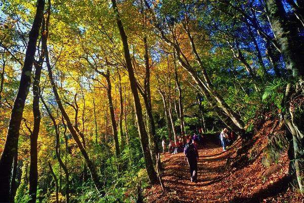 秋遊賞楓景點-霞喀羅景點