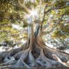 Grounding Visualisation with Tree Meditation