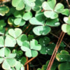 I Am Affirmations to Attract Luck and Money