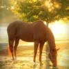 Morning Powerful Meditation with Horses