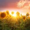 Seeds of Change Manifestation Meditation