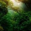Awareness of Breath