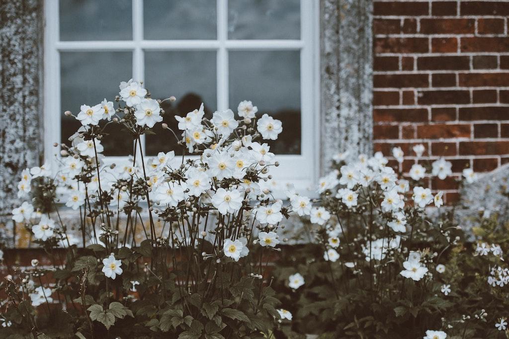 Annie Spratt Unsplash photography flowers