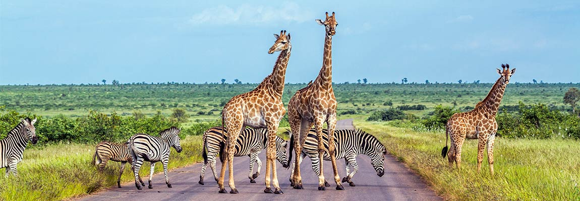 south-africa-destination-5