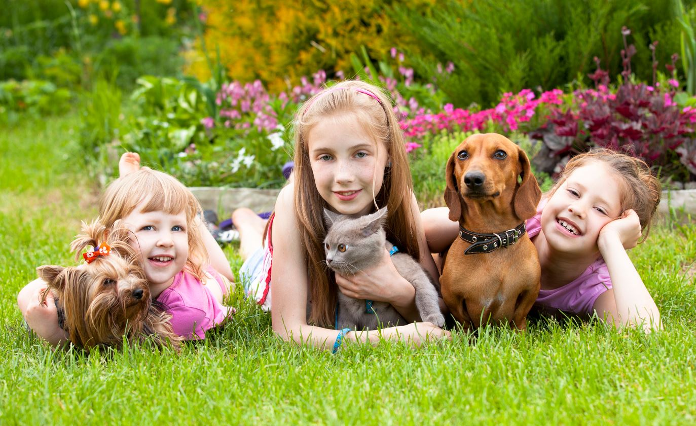 Now dogs, cats can help in reducing stress in students