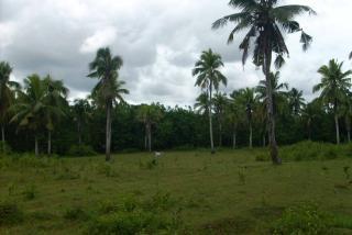 FOR SALE: Lot / Land / Farm Davao 3