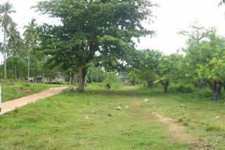 FOR SALE: Lot / Land / Farm Davao 1