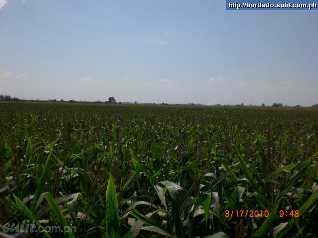 FOR SALE: Lot / Land / Farm Pampanga
