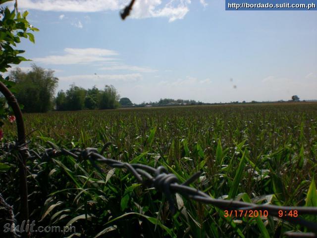 FOR SALE: Lot / Land / Farm Pampanga 2