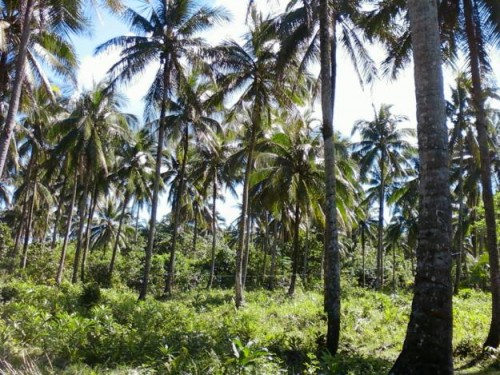 Lot For Sale in General Nakar, Quezon