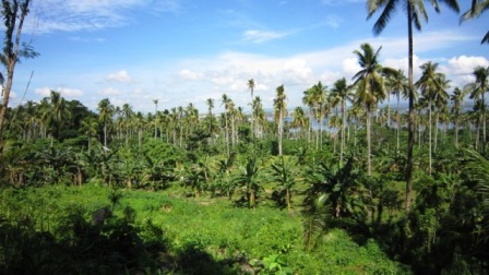 FOR SALE: Lot / Land / Farm Davao >Davao City 1