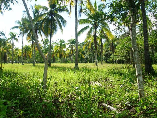 FOR SALE: Lot / Land / Farm Davao del Sur > Samal