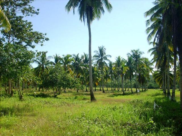 FOR SALE: Lot / Land / Farm Davao del Sur > Samal 4