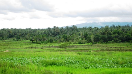 FOR SALE: Lot / Land / Farm Davao >Davao City 2