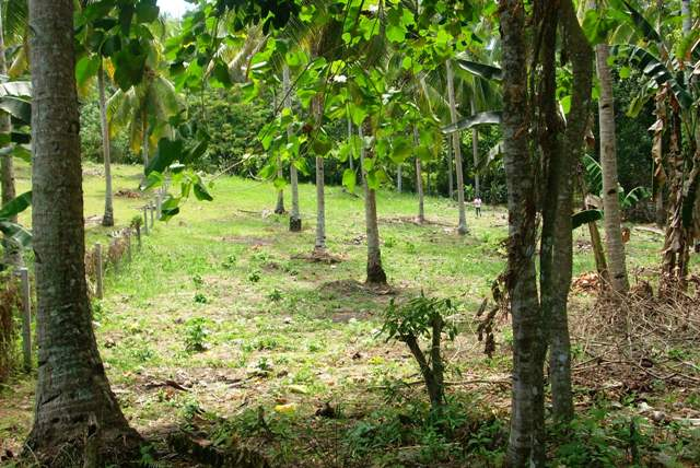 FOR SALE: Lot / Land / Farm Davao del Sur > Samal 0