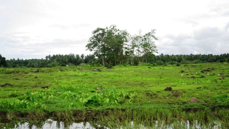 FOR SALE: Lot / Land / Farm Davao 1