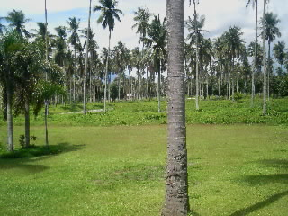 FOR SALE: Lot / Land / Farm Quezon > Other areas 16