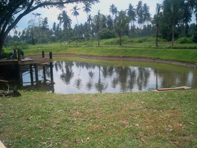 FOR SALE: Lot / Land / Farm Quezon > Other areas 12
