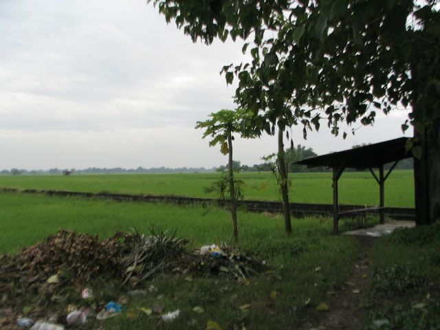 FOR SALE: Lot / Land / Farm Tarlac