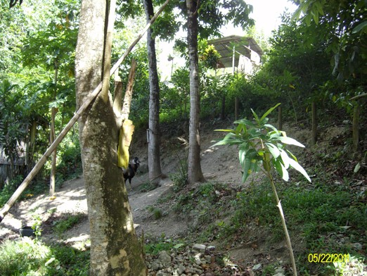 Budlaan Lot  Lot for sale @ Brgy. Budlaan Cebu city. Along Barangay road , Easy to go there,   2 to 5 minutes drive from highway of Talamban Cebu to this property lot,  and 20 minutes walking only.800 meters away from the highway 77.  It is near Gaisano G