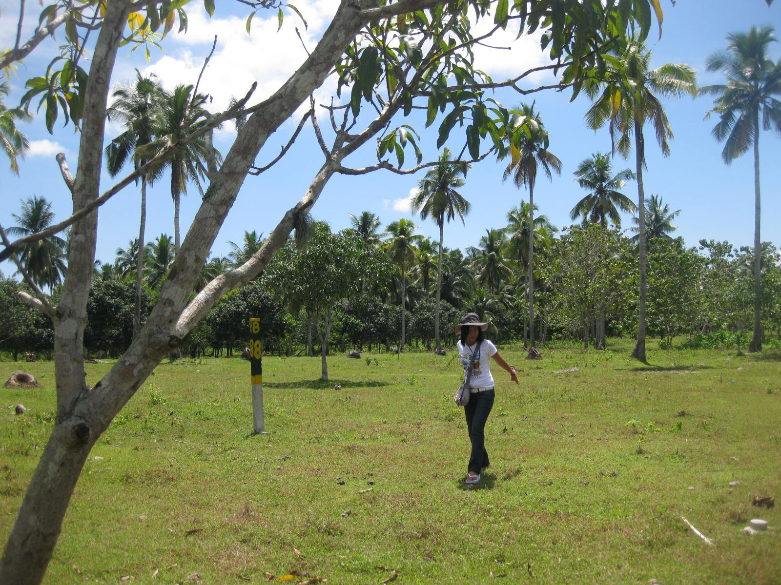 FOR SALE: Lot / Land / Farm Davao del Sur > Samal