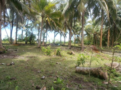 FOR SALE: Lot / Land / Farm Surigao del Norte 1