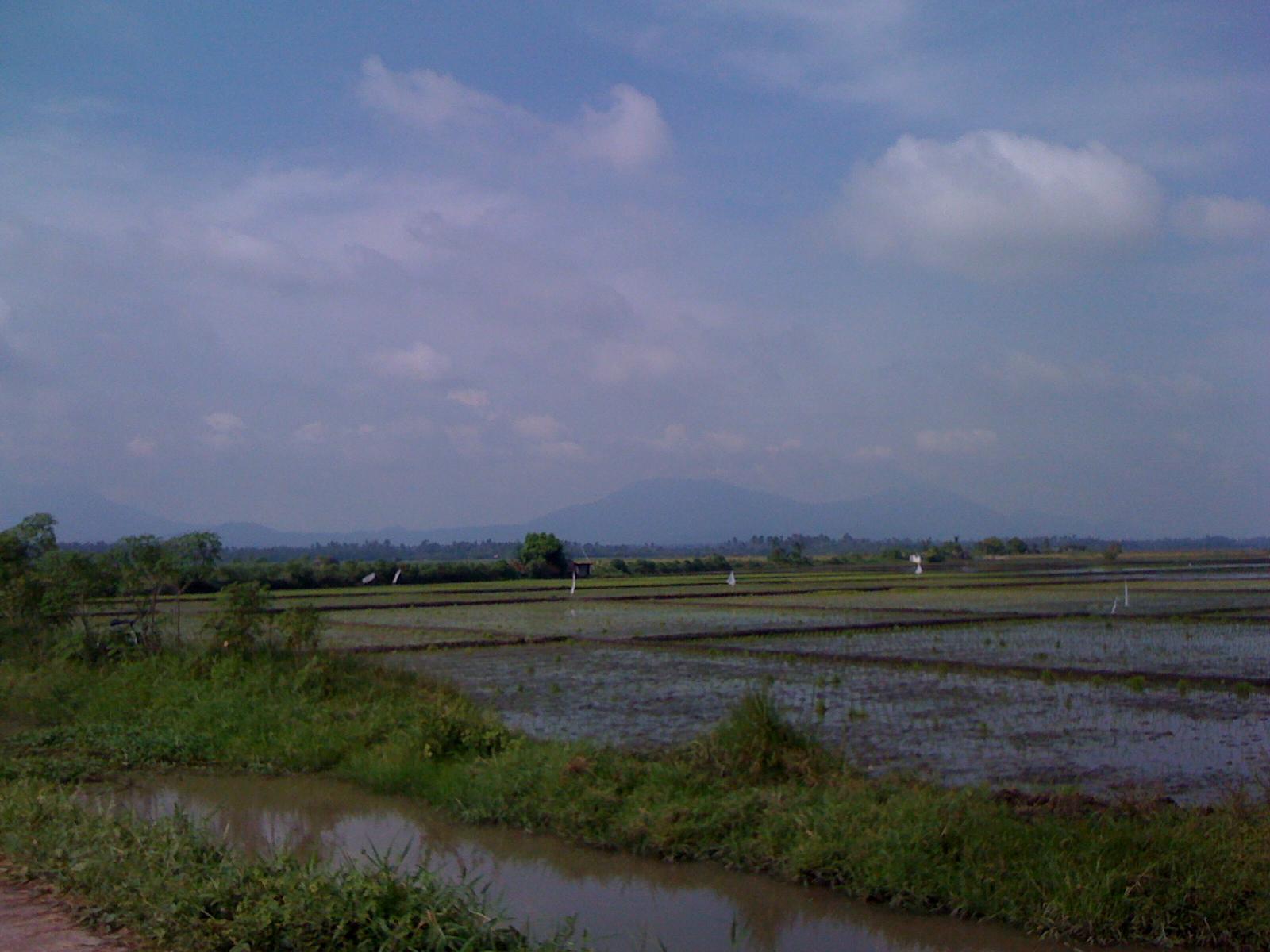 1.8 Hes Ricefield Sta Cruz Laguna