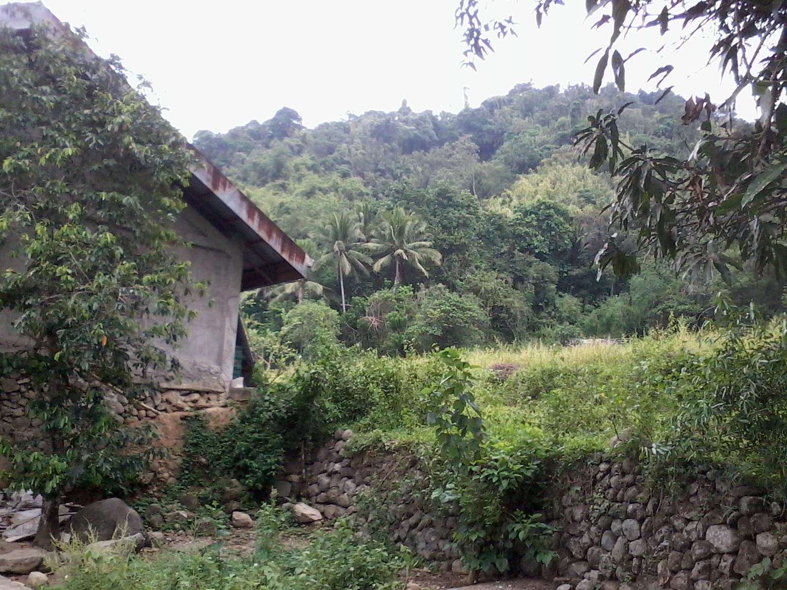 FOR SALE: Lot / Land / Farm Benguet 1