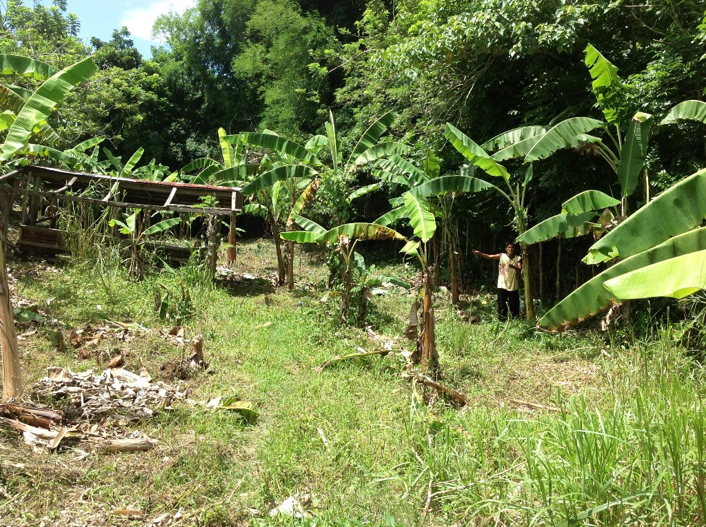 FOR SALE: Lot / Land / Farm Tagaytay 16