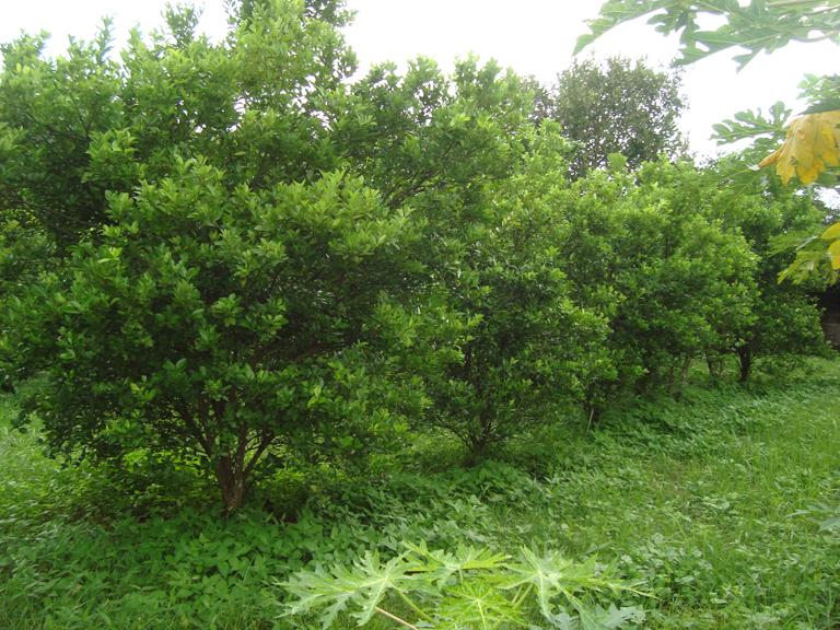 center trees