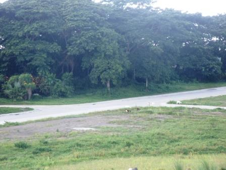 FOR SALE: Lot / Land / Farm Laguna > Calamba 16
