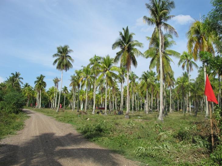 FOR SALE: Lot / Land / Farm Davao del Sur > Samal 1