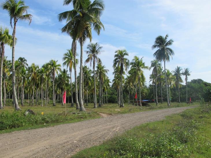 FOR SALE: Lot / Land / Farm Davao del Sur > Samal 2