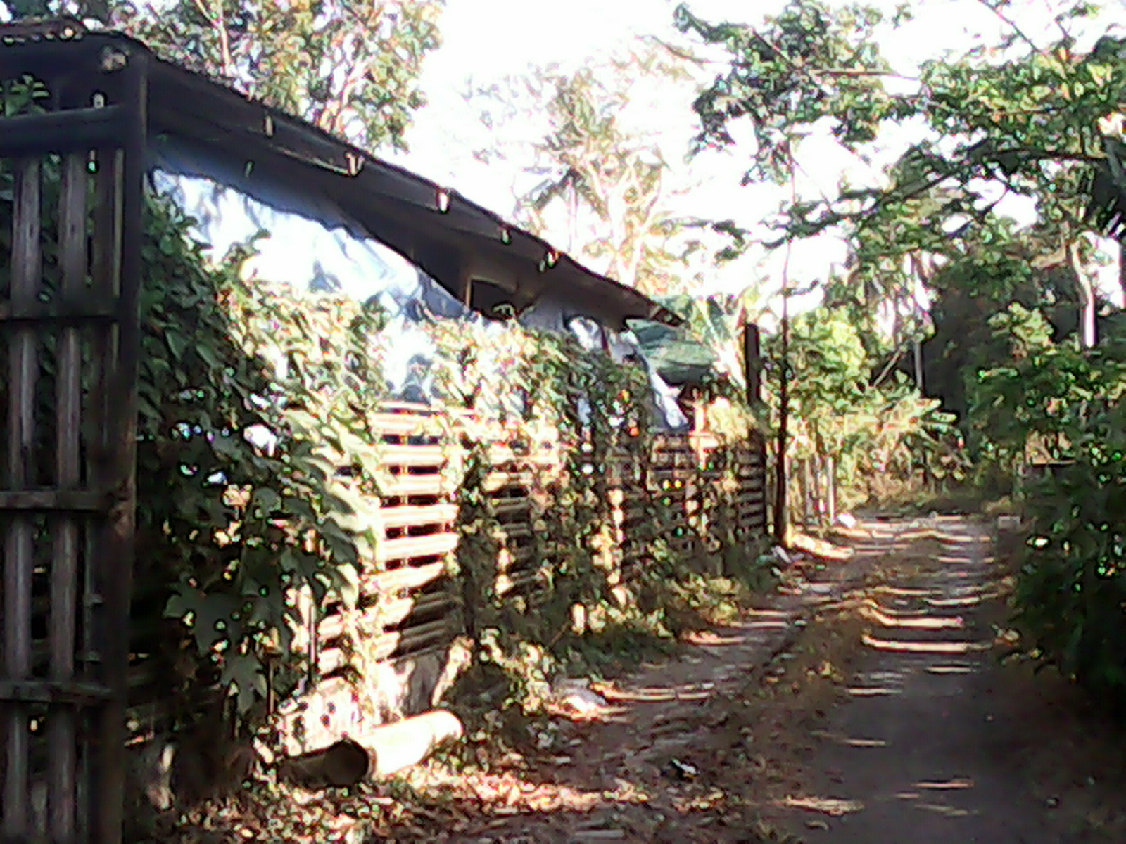 FOR SALE: Lot / Land / Farm Cavite > Silang
