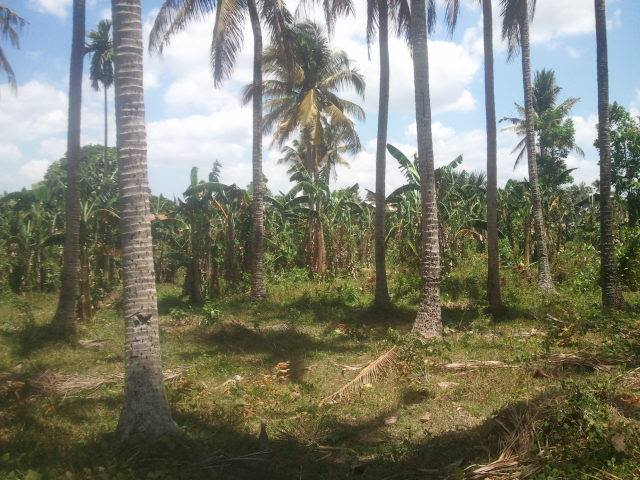 FOR SALE: Lot / Land / Farm Laguna 4