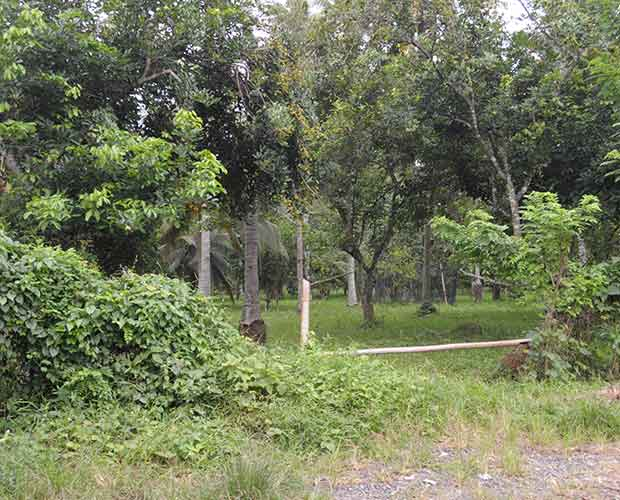 Farm Lot For Sale in Mintal, Davao City
