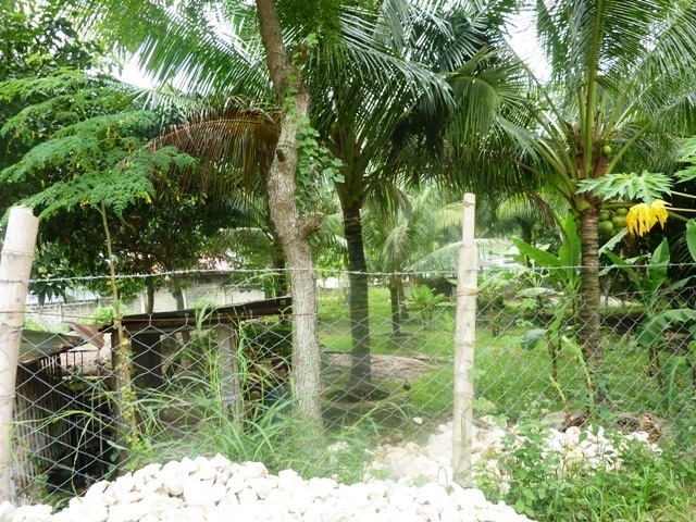 FOR SALE: Lot / Land / Farm Cebu 4