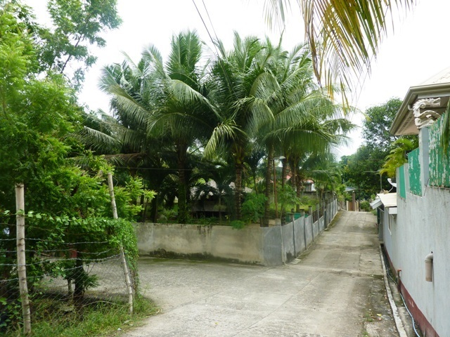 FOR SALE: Lot / Land / Farm Cebu 6