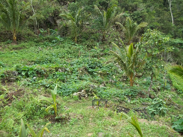 FOR SALE: Lot / Land / Farm Leyte > Other areas