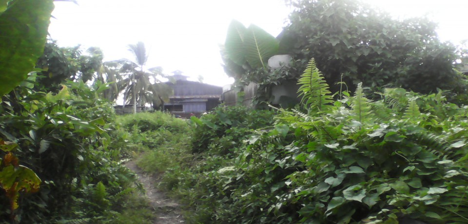 FOR SALE: Office / Commercial / Industrial Agusan del Sur 3