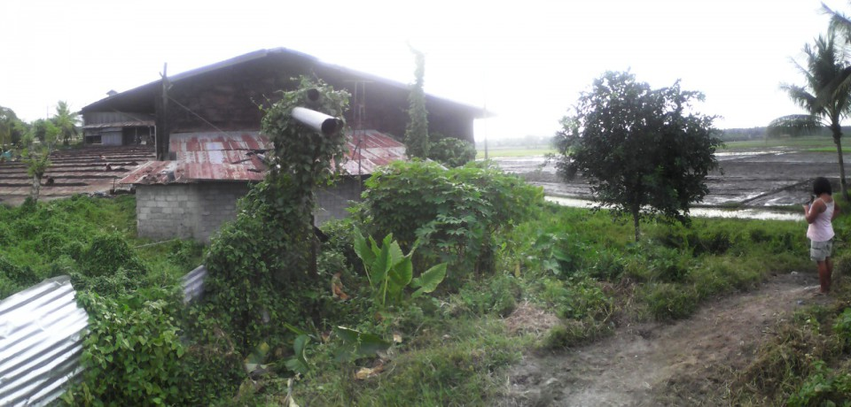 FOR SALE: Office / Commercial / Industrial Agusan del Sur 6