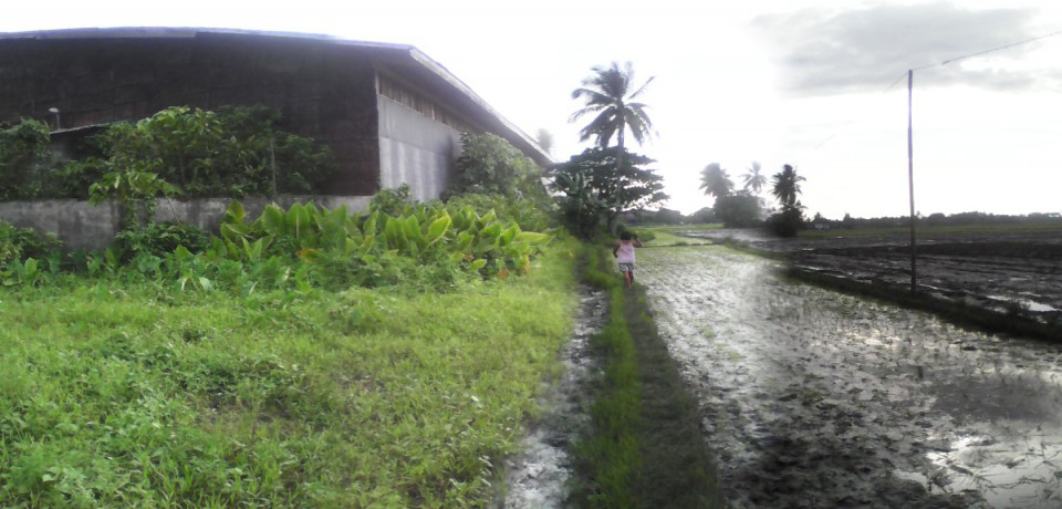 FOR SALE: Office / Commercial / Industrial Agusan del Sur 8