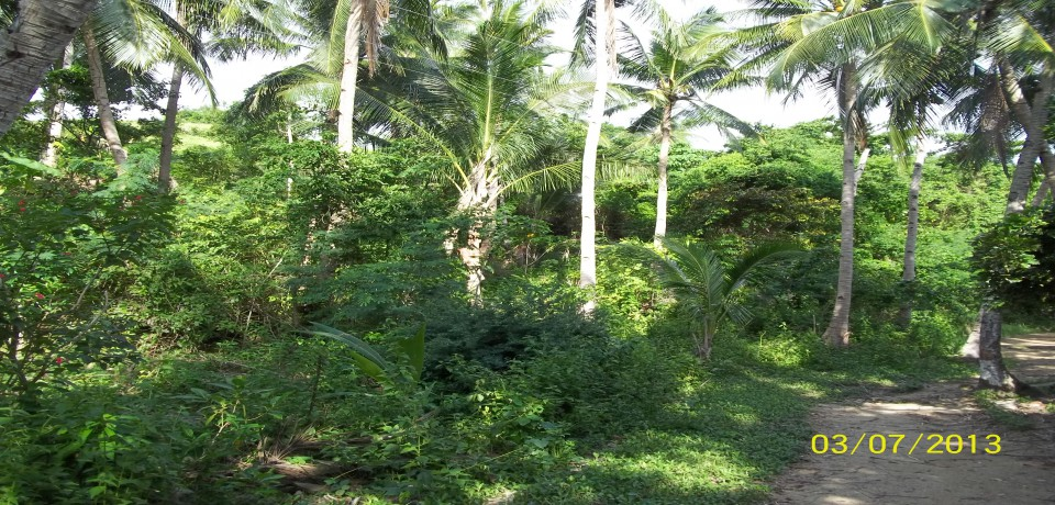 FOR SALE: Lot / Land / Farm Iloilo 6