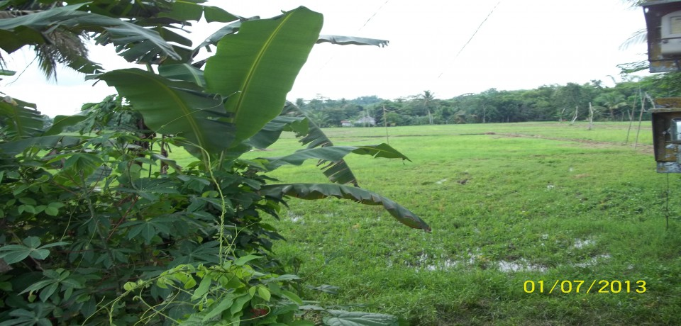 FOR SALE: Lot / Land / Farm Capiz 0