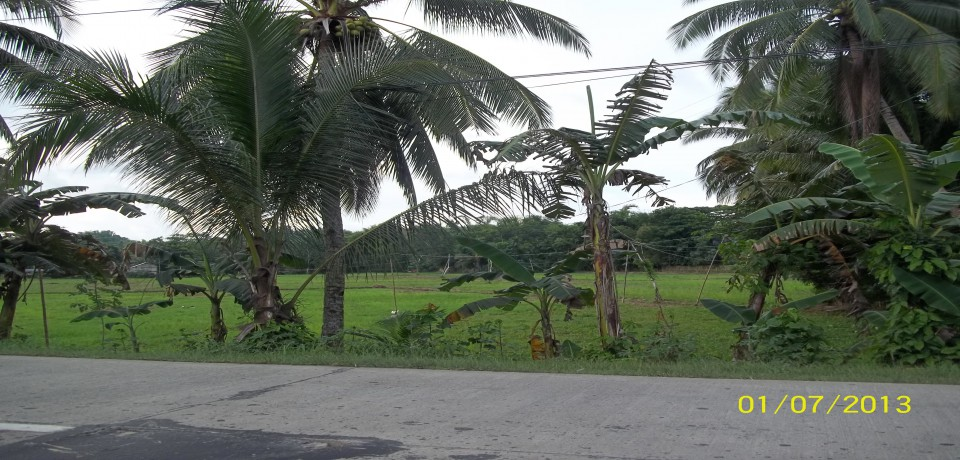 FOR SALE: Lot / Land / Farm Capiz 2