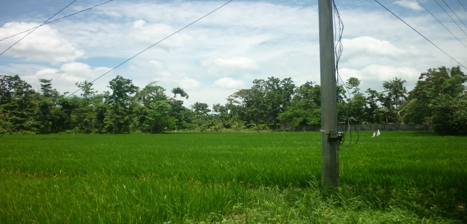 FOR SALE: Lot / Land / Farm Capiz 5