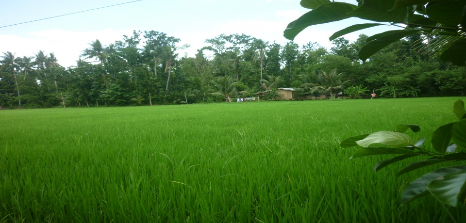 FOR SALE: Lot / Land / Farm Capiz 6