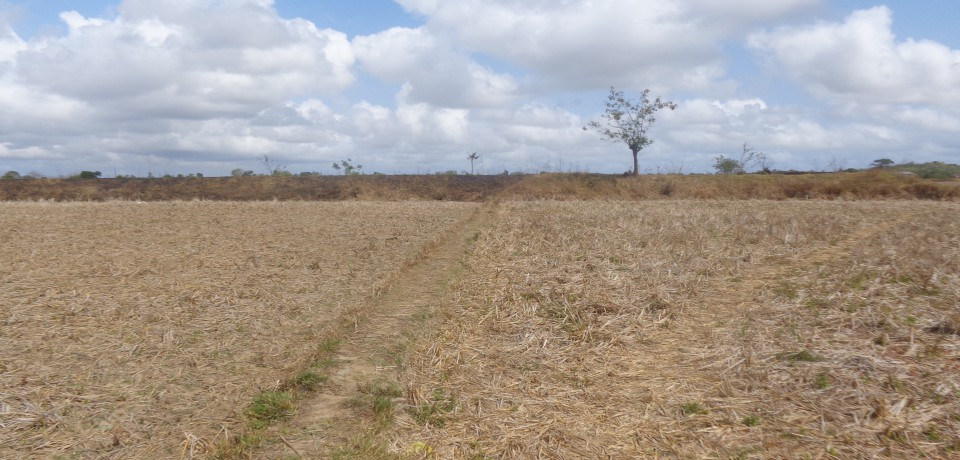FOR SALE: Lot / Land / Farm Pangasinan 2
