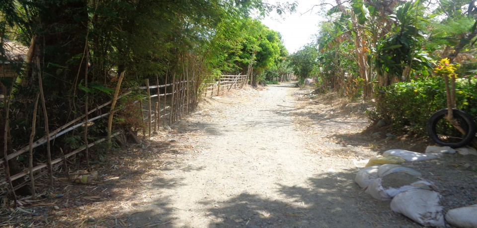 FOR SALE: Lot / Land / Farm Pangasinan 6