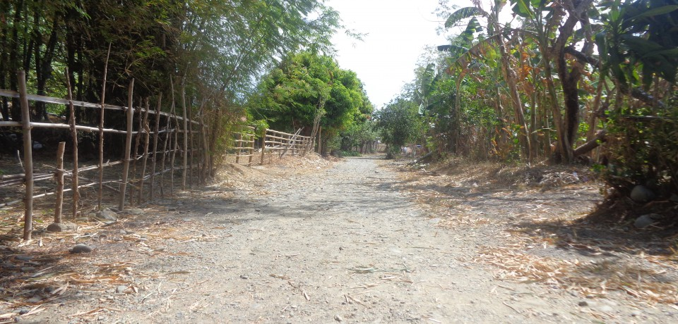 FOR SALE: Lot / Land / Farm Pangasinan 7